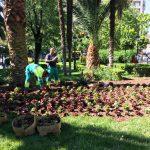 Plantaciones en diversas zonas de la ciudad